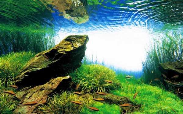 Takashi Amano e seu paisagismo aquático