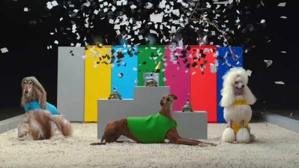 O Novo Comercial da Sony Action Cam vem com Tartarugas e Cachorros