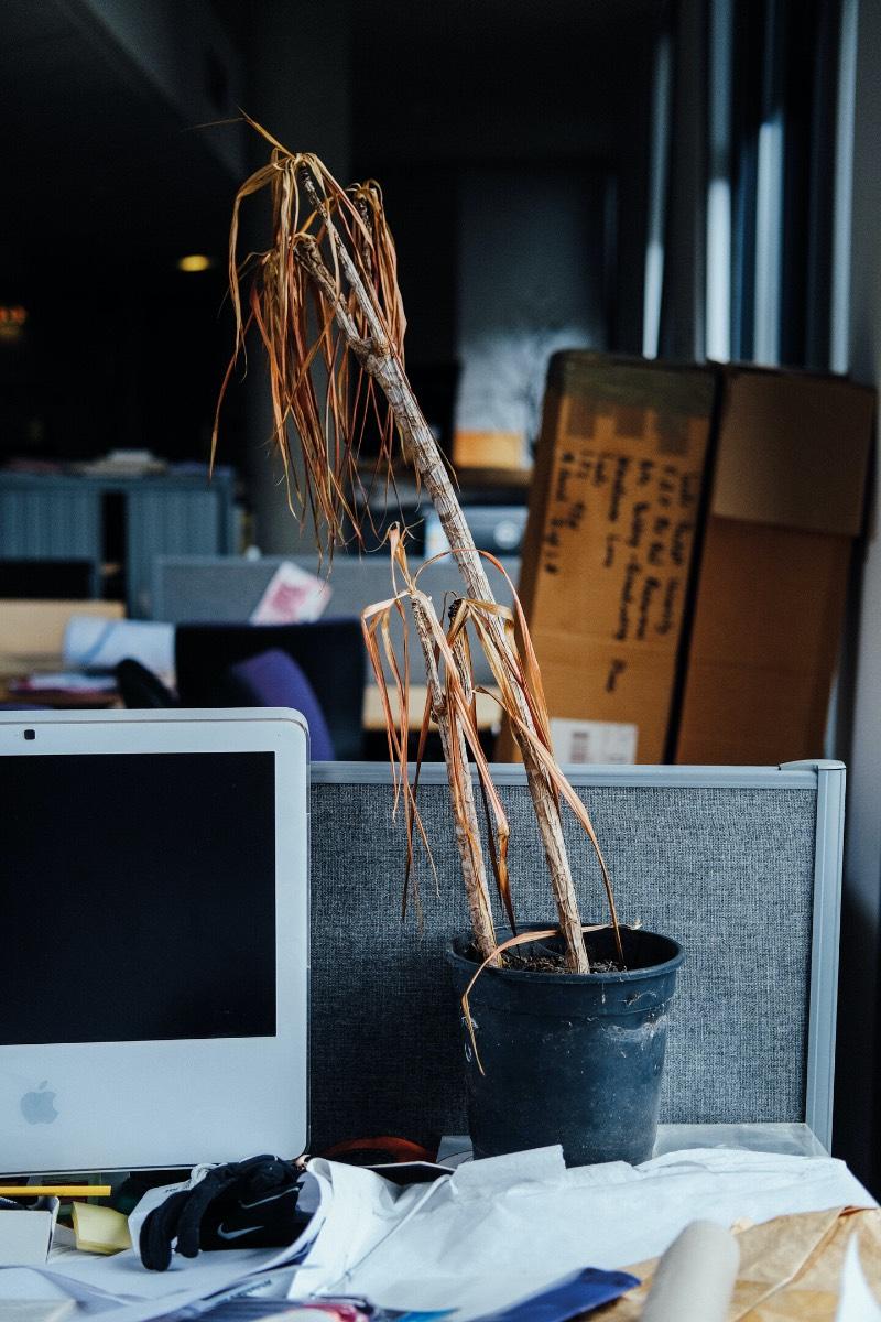 Já que a vida e o trabalho de muitos entraram em uma pausa quase permanente no início de 2020, algumas coisas foram deixadas de lados nos escritórios. Uma das vítimas do Coronavírus foram as plantas de escritório que foram esquecidas e acabaram virando o alvo das fotografias de Ricky Adam.