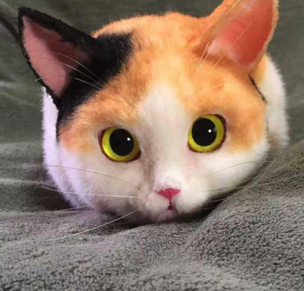 Bolsas de Gatos Japonesas