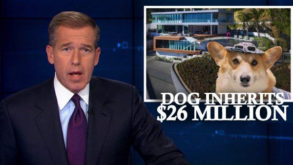 Vendendo Imóveis com Vídeos de Cachorros