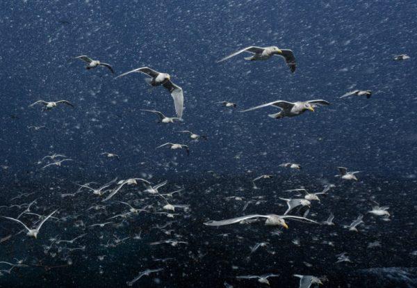 Aleutian Dreams: uma vida de pescador no Alaska nas fotografias de Corey Arnold
