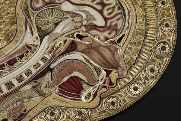 Lisa Nilsson e sua série de Anatomia de Papel