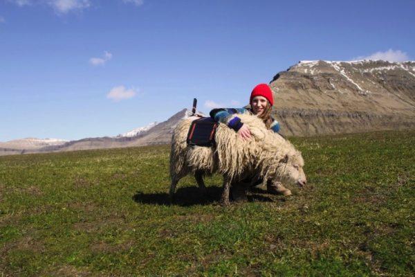 Sheep View 360: Como o Google capturou a essência das Ilhas Faroe através de Ovelhas