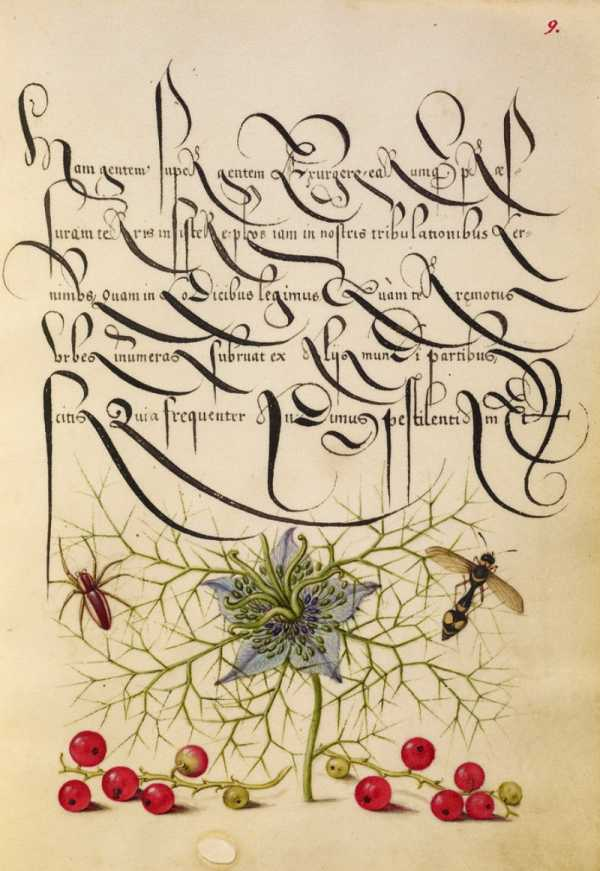 Mira Calligraphiae Monumenta: Um Livro de Caligrafia direto do Século XVI