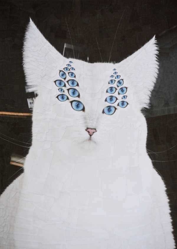Os Gatos e Cachorros nas Colagens de Lola Dupre