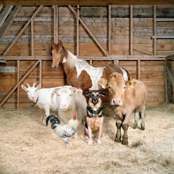 The Dog & Pony Show nas fotografias de Rob MacInnis