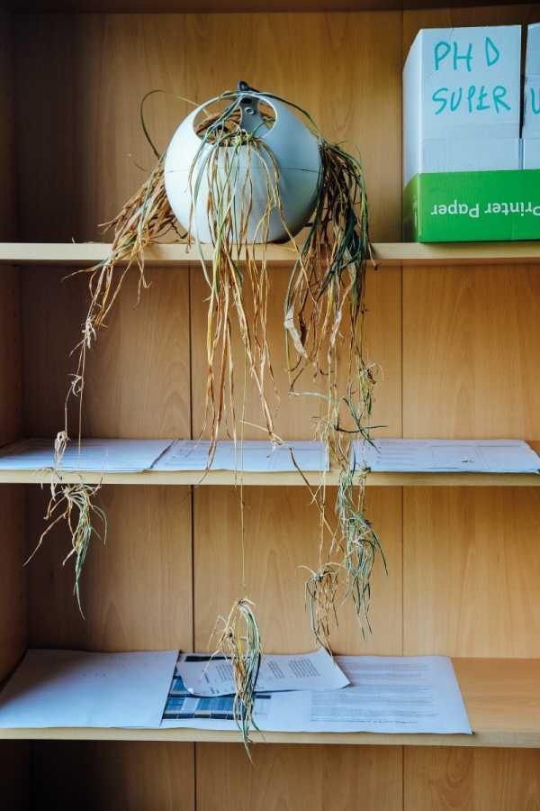 As Plantas de Escritório que não sobreviveram a Pandemia nas fotos de Ricky Adam