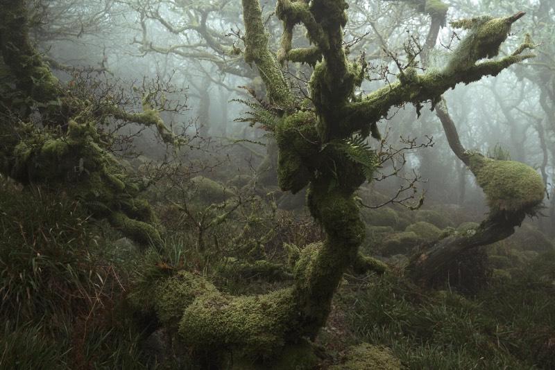 Neil Burnell é um fotógrafo britânico que recentemente lançou um livro chamado Mystical. Nele, ele explora um labirinto cheio de musgos e raízes distorcidas que acabam manifestando as qualidades mais fantásticas da natureza. Tudo isso acontece em uma região conhecida como Wistman's Wood, uma antiga floresta natural na região de Devon, na Inglaterra.